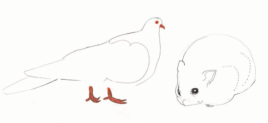 Pet Portrait Pigeon, Dwarf Hamster ©Jalmar Staaf