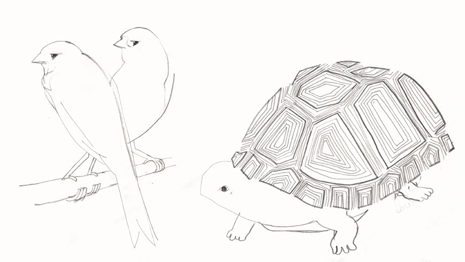 Pet Portrait Canary birds, Asian Box Turtle ©Jalmar Staaf