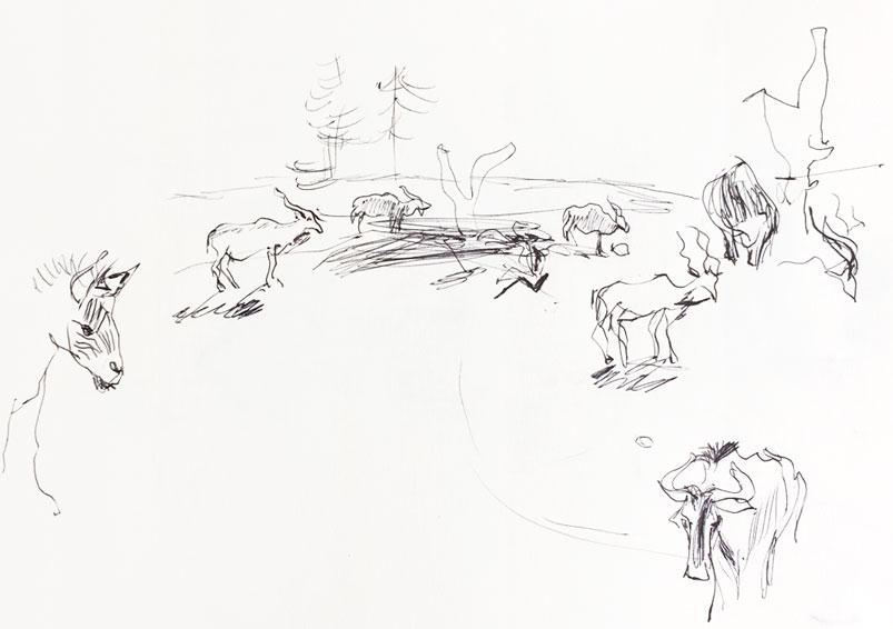 Live sketch Kolmården ©Jalmar Staaf